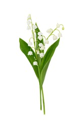 Pair of lily of the valley flowers isolated on white