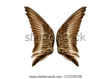 Pair of natural colored bird wings from a sandpiper shorebird./Pair of natural bird wings from outside view