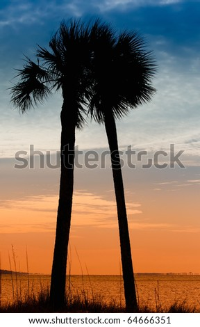 Pair of Palm Trees in Panama City, Florida