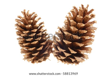pair of pine cones isolated on a white background for use in christmas decorations