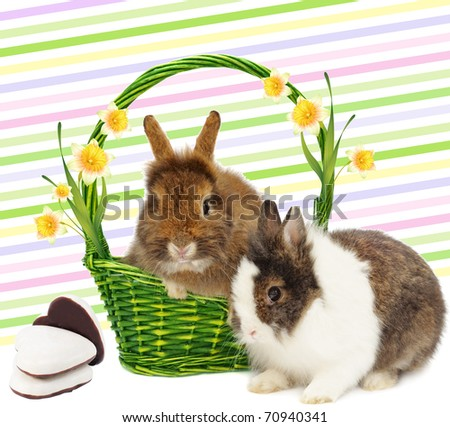 pair of rabbits rabbits in basket with narcissus and bow on colorful background
