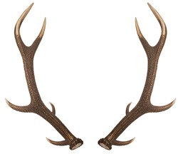 Pair of red deer antlers on a white background. Deer antlers. Isolatedon white background.