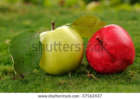 Pair of ripe red and yellow apples lying on green grass outdoors. Find more in my portfolio