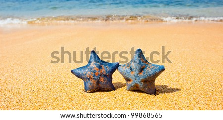 Pair of sea stars at the sand beach against the wave