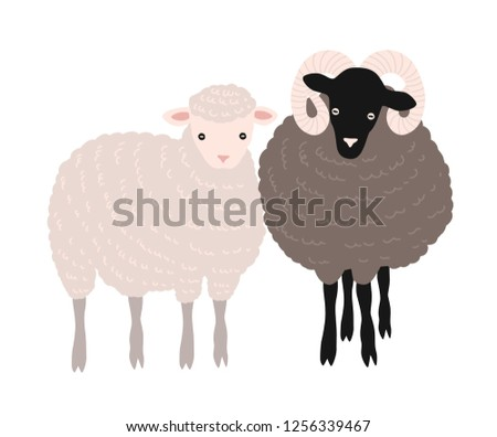 Pair of sheep and ram standing together. Adorable barnyard domestic ruminant animals or farm livestock isolated on white background. Childish colored illustration in flat cartoon style.