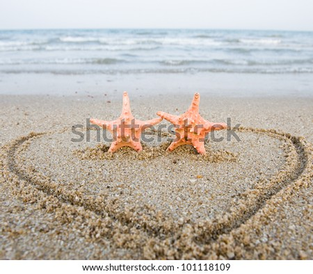 Pair of starfishes on the shore