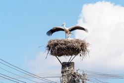 Pair of stork in the nest