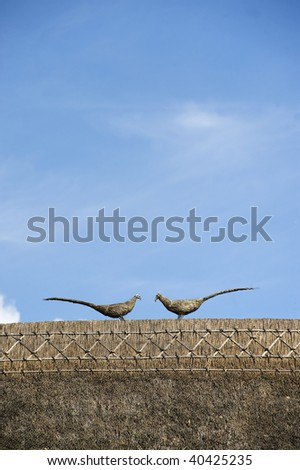 Pair of Thatched Pheasants on a roof