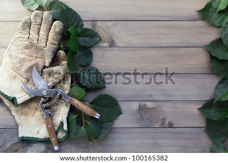 pair of worn out glover, pruning scissor and some green leaves on wooden table