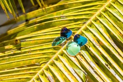 Pair on sunglasses laying on the palm leaf on sunny day. Male and female sunglasses. Heart shaped glasses. Vacation concept. Vacations on tropical island, unity concept