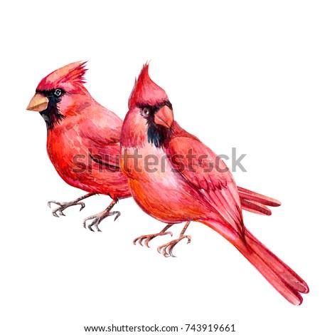 pair, red Cardinal bird watercolor