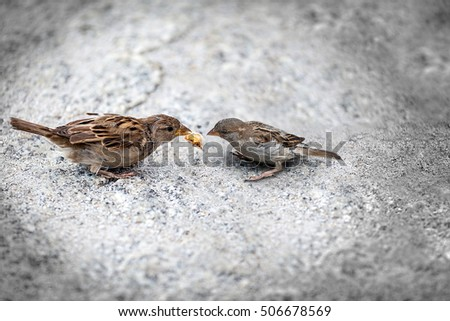 Pair sparrows  mother and chick, maternity and environmental protection