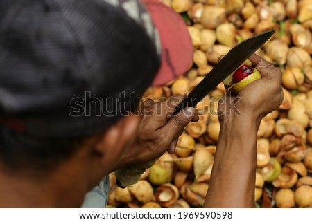 Pala, Ternate, North Maluku. Spices known as pala in Indonesia and red mace from tree Myristica fragrans in Ternate Islands Moluccas Spice Islands. Foto stock ©