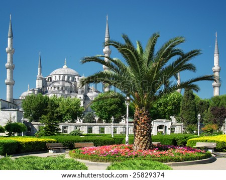 palace palm, Blue Mosque, Istanbul