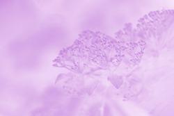 Pale violet blurred background, floral pattern