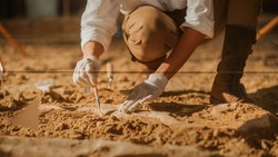 Paleontologist Cleaning Tyrannosaurus Dinosaur Skeleton with Brushes. Archeologists Discover Fossil Remains of New Predator Species. Archeological Excavation Digging Site. Close-up Focus on Hands