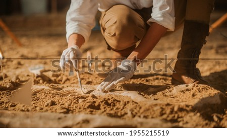 Paleontologist Cleaning Tyrannosaurus Dinosaur Skeleton with Brushes. Archeologists Discover Fossil Remains of New Predator Species. Archeological Excavation Digging Site. Close-up Focus on Hands Foto stock ©