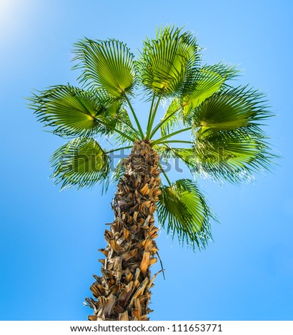 Palm against the blue sky. Photo Close-up