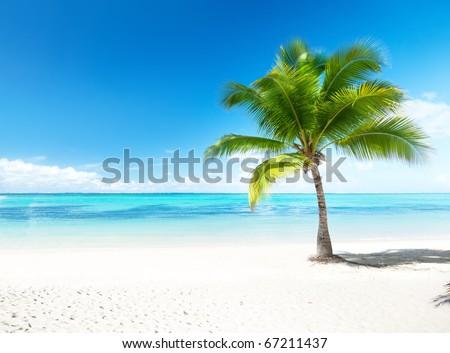 palm and beach #67211437