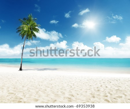 palm and beach - stock photo