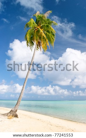 Palm and beach, Maupiti, French Polynesia