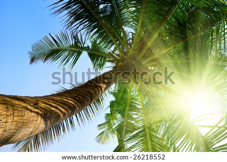 palm and morning sky