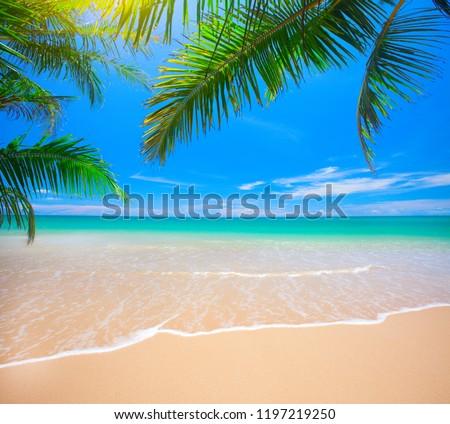 Palm and tropical beach #1197219250