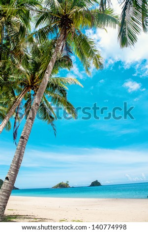 Palm and tropical beach. - stock photo