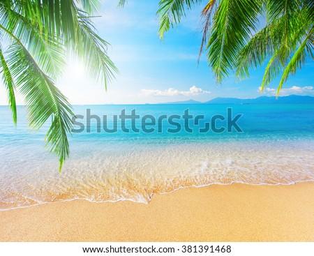 Palm and tropical beach #381391468