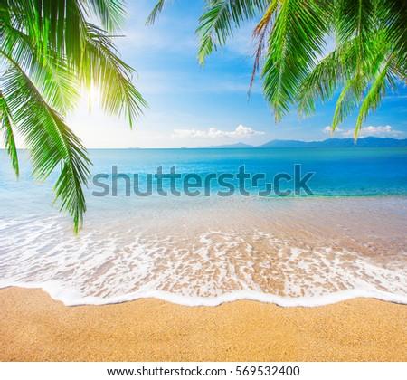 Palm and tropical beach #569532400