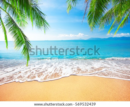 Palm and tropical beach - Shutterstock ID 569532439
