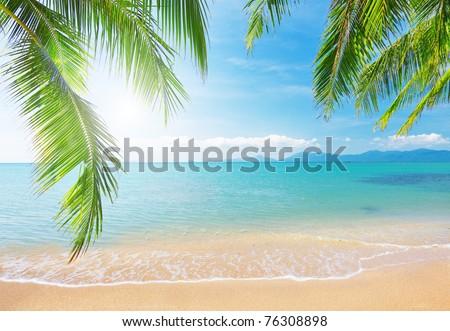 Palm and tropical beach #76308898