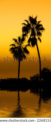 Palm at sunset - at the beach
