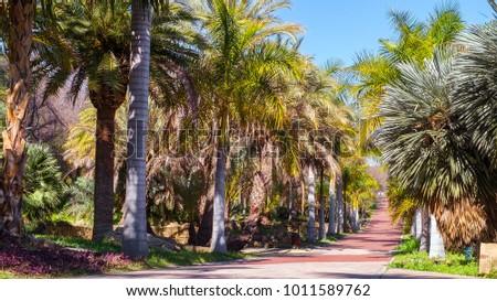Shutterstock Palm avenue, Conception garden, jardin la concepcion in Malaga, Spain