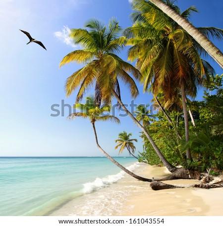 Palm beach near Pigeon Point (Tobago, West Indies) with Frigatebird