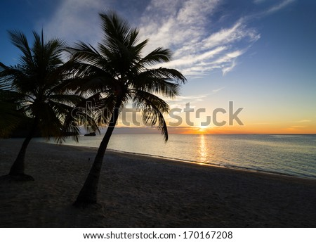 Palm black outline during sunset on the beach