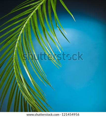 Palm branch on the blue background #121454956