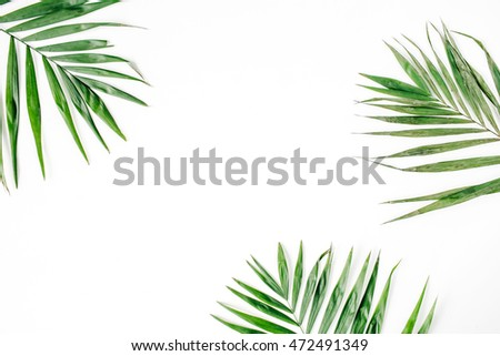 palm branches isolated on white background. flat lay, top view