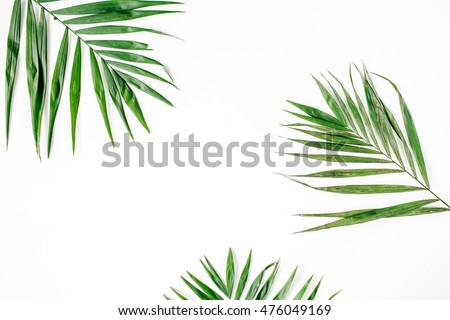 palm branches isolated on white background. flat lay, top view #476049169