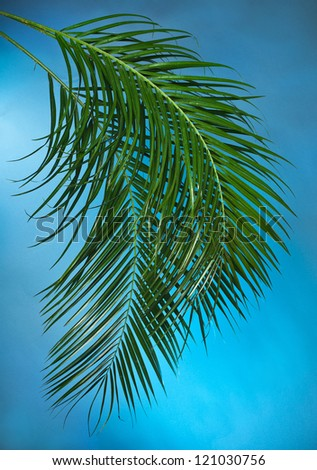 Palm branches on  the blue background