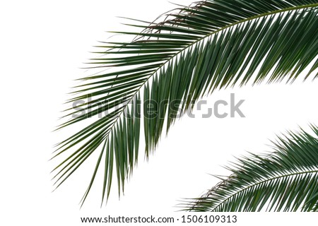 palm branches with green leaves on an isolated white background as a template #1506109313