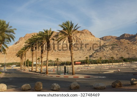 Palm Desert - Palm trees and mountains