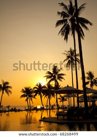 Palm forest silhouettes on sunrise