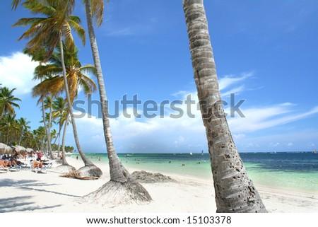 Palm fringed beach, Punta Cana, Dominican Republic