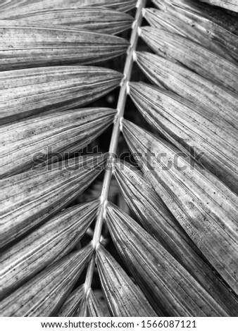 Palm frond - Black and White Portrait Format #1566087121