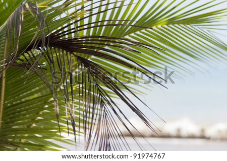 Palm fronds at beach in Costa Rica - Punta Leona, Puntarenas province, Central Pacific Coast, Costa Rica