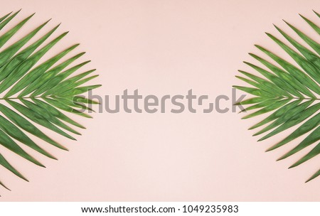 Palm green leaf on pastel color background. #1049235983