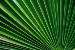 Palm Green Tropical leaves background Plant Texture