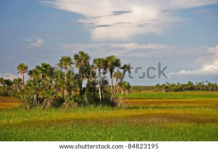 Palm Hammock, Big Cypress National Preserve, Florida Everglades