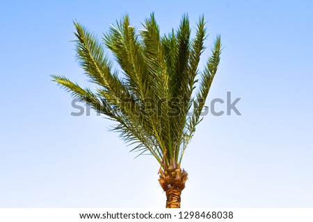 palm in front of blue sky and sun
